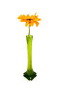Orange gerbera isolated Royalty Free Stock Photography