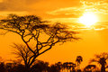 Orange glow of an african sunset Royalty Free Stock Photo