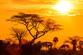Orange glow of an african sunset with tree in front Stock Image