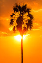 Orange glow sunset with a palm tree silhouette in front Royalty Free Stock Photos