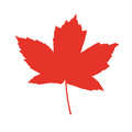 Orange isolated vector maple leaf of Royalty Free Stock Photography