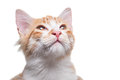 Orange Kitten Royalty Free Stock Photo