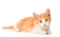 Orange kitten looking at camera on white background Royalty Free Stock Photo