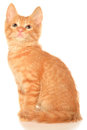 Orange kitten sitting isolated Royalty Free Stock Photo