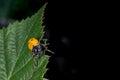 Orange ladybug macro on green background Royalty Free Stock Photo