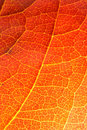 Orange leaf close-up Royalty Free Stock Photography