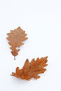 Orange leafs in snow Royalty Free Stock Photo