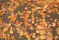 Orange leaves on the earth Royalty Free Stock Photo