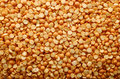 Orange lentil background Royalty Free Stock Image