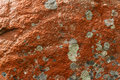 Orange lichens covering the stone Royalty Free Stock Photo