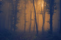 Orange light through the mist in the forest tree silhouettes with fog Stock Images
