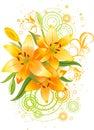 Orange lily flowers Royalty Free Stock Photo