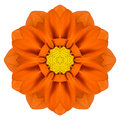 Orange mandala gerbera flower kaleidoscope isolated on white background Royalty Free Stock Photo