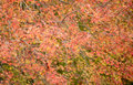 Orange maple leaf background in autumn the Stock Photo