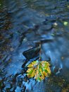 Orange maple leaf on mossy stone below increased water level blurred motion of blue waves around the Stock Image