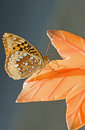 Orange moth or butterfly an spotted on a plastic leaf lawn ornament Royalty Free Stock Photos