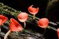 Orange mushroom Stock Image