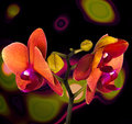 Orange orchid on the background of universe structure Royalty Free Stock Images