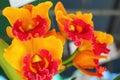 Orange Orchid Flowers In The N...