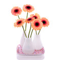 Orange pink gerber flowers in white little vases isolated over white background Stock Images