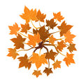 Orange plant or tree, top view. Vector illustration, isolated on white. Royalty Free Stock Photo