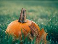 Orange Pumpkin on Green Grass Field during Daytime