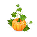 Orange pumpkin vegetable with green leaves isolated on white Stock Photography