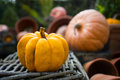 Orange pumpkin on wicker basket small with autumn gardening decor background Royalty Free Stock Image