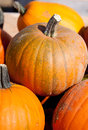 Orange pumpkins for sale waiting to be chosen and taken home Stock Image