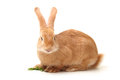Orange rabbit on white background Stock Photo