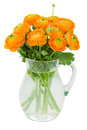 Orange ranunculus flowers in vase isolated on white background Royalty Free Stock Photos