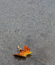 Orange red leaf lower curled on the wet driveway on the bottom of image Royalty Free Stock Photo