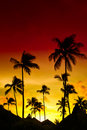 Orange and red sunset over sea beach with palms Royalty Free Stock Photography
