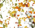 The Orange, Red, Yellow and Greens of Autumn - 13