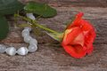 Orange rose with dew drops and beads made ​​of natural stone Stock Photography