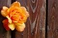 Orange Rose Flower On Wooden Background Royalty Free Stock Photo