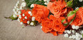 Orange rose flowers on canvas background Stock Images