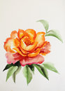 Orange rose original watercolor painting � asian style Stock Image