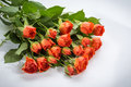 Orange roses bouquet of close up Stock Photography