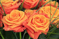 Orange roses close up of a bouquet of beautiful with straw stalks Royalty Free Stock Photo