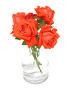 Orange roses in a glass vase over white Stock Image