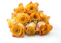 Orange roses isolated on the white background Royalty Free Stock Images