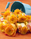 Orange roses in a tin bucket Royalty Free Stock Photos