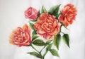 Orange roses watercolor painting