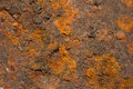 Orange rust grunge abstract background Royalty Free Stock Photo