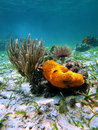 Orange sea sponge and coral Stock Images