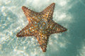 Orange sea star in the turquoise water Royalty Free Stock Photo