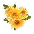 Orange  spray garden chrysanthemum Stock Photo