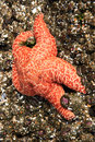 Orange Starfish Royalty Free Stock Photos
