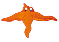Orange starfish cartoon style on a white background Royalty Free Stock Images